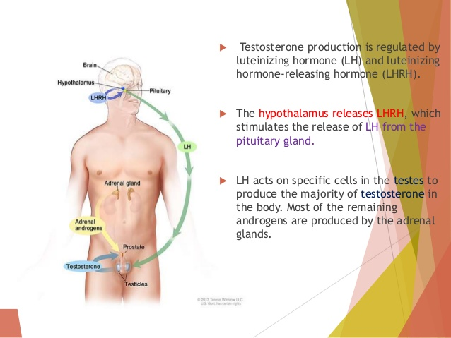 Hormone therapy in prostate cancer